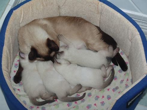 Афина с малышами. 11.01.2009