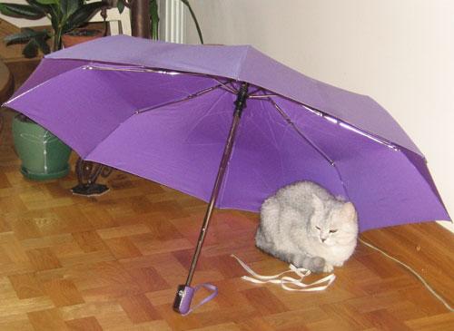 Композиция Амелия, зонт и шнурок